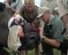 Африканские носороги находятся на грани истребления