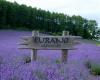 Лавандовые поля Прованс, Франция - почти одно из чудес света