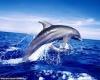 Рост туризма угрожает дельфинам