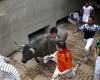 Гибель туриста в попытке сделать селфи с быком