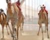 Верблюжьи скачки в Кении