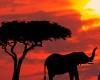 Из Кении эвакуировали британских туристов