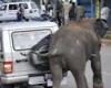 Сбежавшие из цирка слоны разбили несколько автомобилей