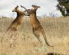 В Австралии стартовала новая кампания по развитию туризма