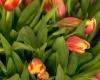 Проведите незабываемый День Матери в Лондоне