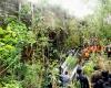 Трагическое ДТП в Индонезии