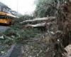 Большое количество смертей вследствие бури на западе США