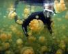 Озеро медуз – главная достопримечательность в Палау