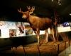 В Лапландии готовятся отмечать юбилей музея