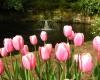 В Турине пройдет фестиваль тюльпанов