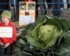 10-летний мальчик вырастил гигантскую капусту
