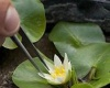 Из Королевского ботанического сада в Лондоне украли редчайшее растение