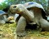 Удивительная черепаха Галапагосского парка