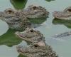 Редкие рептилии украдены из зоопарка в Сиднее
