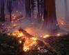 Лесные пожары охватили Грецию