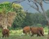 В Кении продолжают убивать слонов