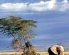 Танзания: турпоток из Китая увеличивается