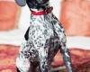 Новая программа в отелях Мальты для владельцев домашних животных