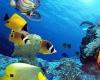 Остров Реюньон празднует Всемирный день океанов