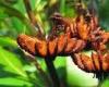Новый вид папоротника в Сейшельских островах