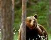 В Германии открывается новый Национальный парк
