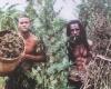 На Ямайку за марихуаной!