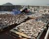 Акульи плавники официально запрещены  в Гонконге