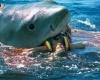 Акула напала на туристку из Австралии на курорте в Хургаде
