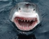 В Гавайи акула напала на молодую девушку из Германии
